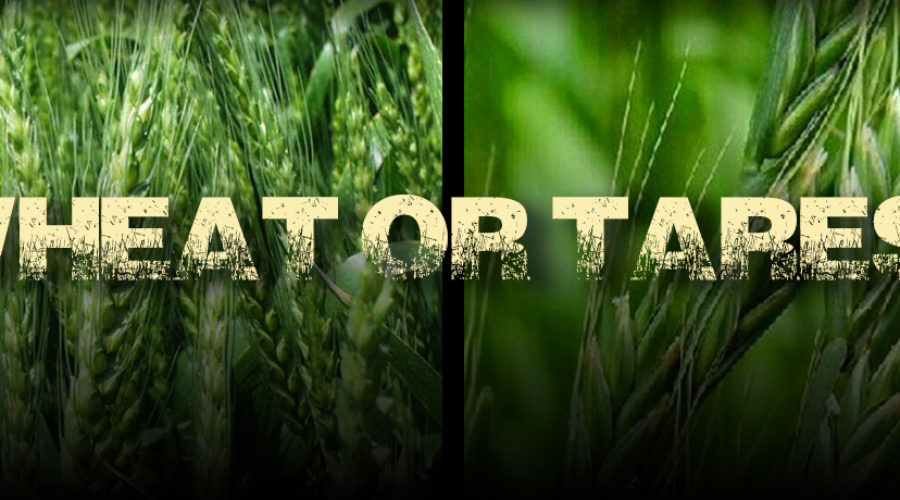 Wheat or Tares